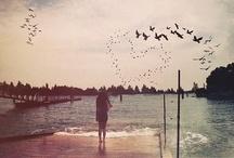 Photography Love / by Selin Acar