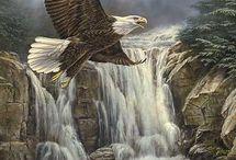 Αετός 7