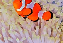 Clown fish / http://similandivecenter.com/list/daytrips.html See the clown fish during  diving daytrip