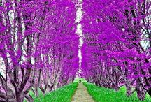 Natural color / Paesaggi alberi