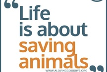 <3...for thee love of animals*