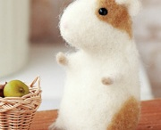 hamster and rodents / by Petra Mach