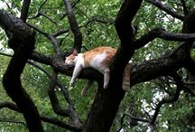 Cat Naps / by Cheryl Ponce