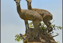 Wildlife from Africa / Wildlife from Africa