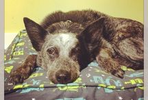 We love Molly Mutt / We love our Molly Mutt dog beds