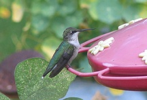 Hummingbirds / by Laurie Mohr