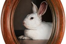 Monthly Miniature - Rabbits / Miniature oil paintings of rabbits.