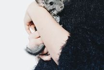 ↟ My cute baby chinchilla ↟