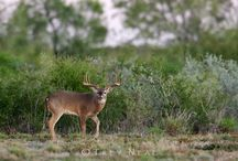 Hunting Leases