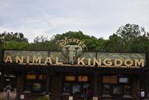 Disney's Animal Kingdom 2017