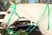 Paard hoofdstel