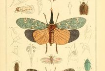 insectis