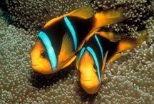 Zvieratá v oceáne,jazere,rieke,akvárium.....Ryby,rybky,rybičky
