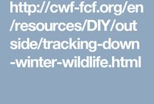Wildlife Tracks; wildlife detectives