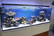 reef aquarium...