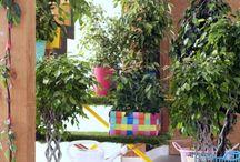 &FICUSFAMILY / Ob Ficus Benjamina, Gummibaum, Geigenfeige oder Ficus Ginseng – der Ficus hat viele Gesichter!