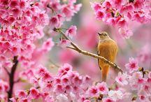 obrázky přírody ♥ JARO ♥