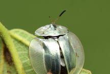 My Beetle Mania