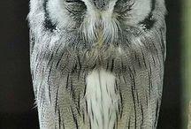 ♥ Owls ♥