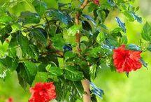 arbustes fleuris
