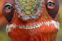 Reptiles / by Margie Brecik