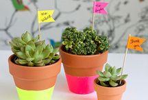 Garden ideas - flowers - plants - decor