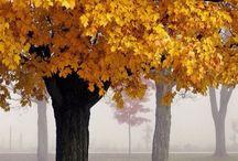 Oh,Autumn!