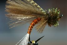 emerger caddice flys