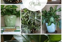 plants and greenery / by Mary Ackert Deil