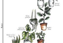 House - plants
