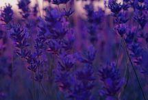 Flowers / Piękne kwiaty i rośliny.