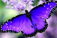 Repülő ékszerek - pillangók, lepkék