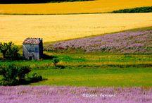 Provence landscape / Paesaggi in Provenza. I sentieri della lavanda