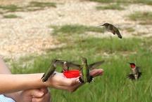 Birds and Butterflies / by Debra Trautman