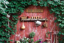 Gardens / Garden, gardening tips, garden art... and anything else associated with gardens.