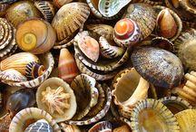 ....caracolas de la blanda arena que lame el mar...