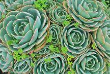 Succulents / by Belem García-Stanley