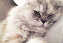 cat / mon animal préféré