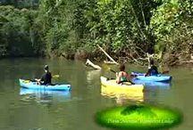 Videos / Videos about Playa Nicuesa Rainforest Lodge / by Nicuesa Lodge