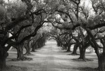 """""""Portraits of Time"""" Beth Moon"""