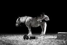 Artistes Equestres b&w