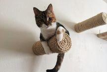 cat thingis