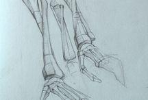 анатомия рисунок