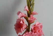gladiole