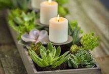 succulent table pieces