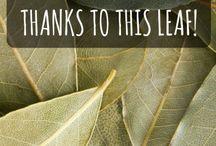 Plants&Herbs
