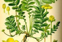 растения_сбор