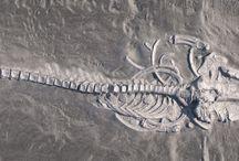 Geology & Fossils / by Scott Miller