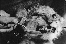 You Animal! / by Agatha Palider