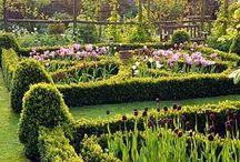 Озеленение и цветы